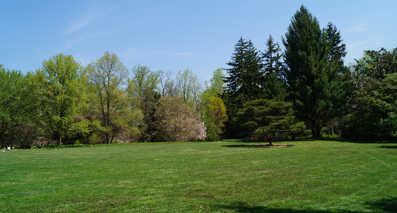 Large lawn area