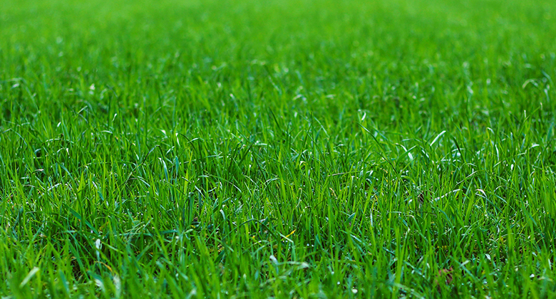 Display of the grass length for correct mowing